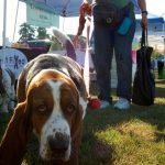 Gode råd om hundepasning