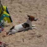 På ferie uden hund