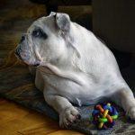 Udfordr din hund med smart legetøj